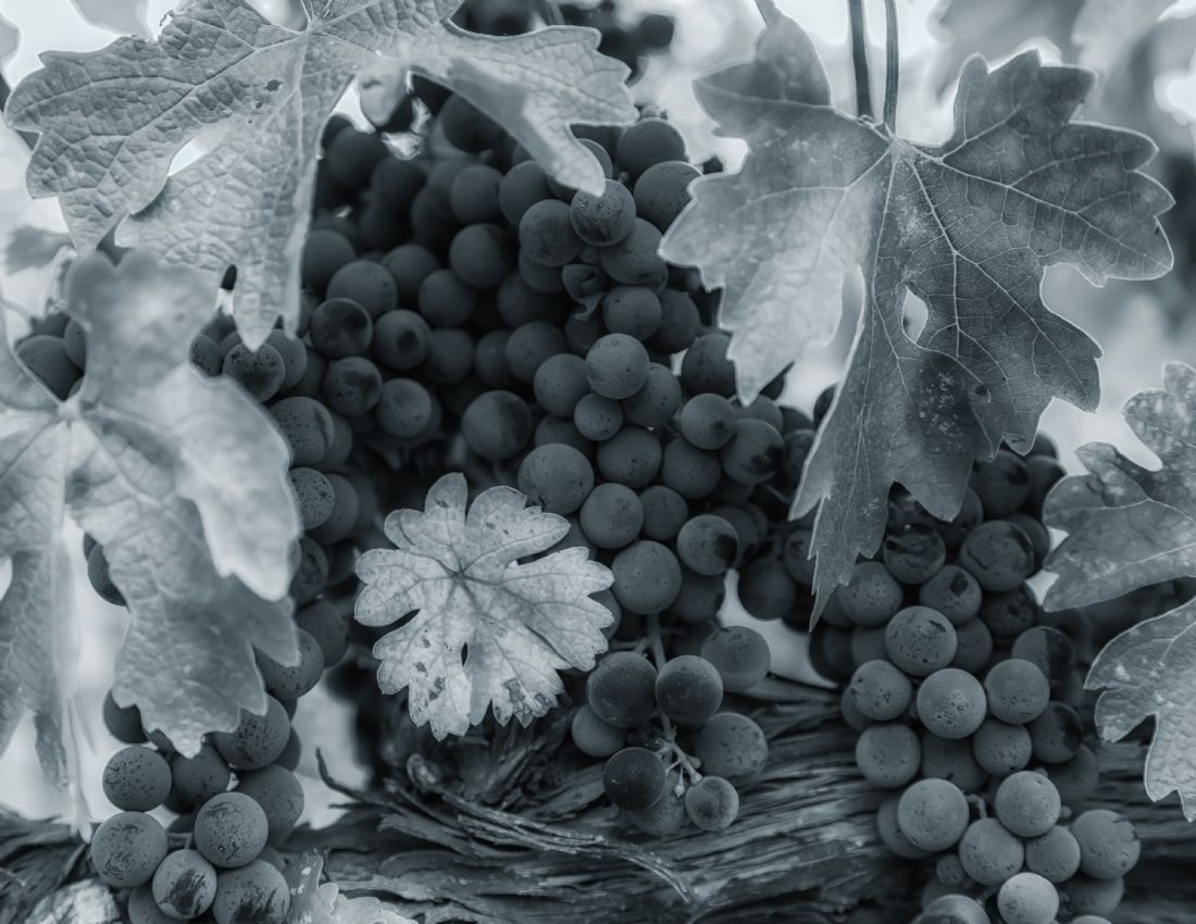 jonathan nguyen | grapes bw