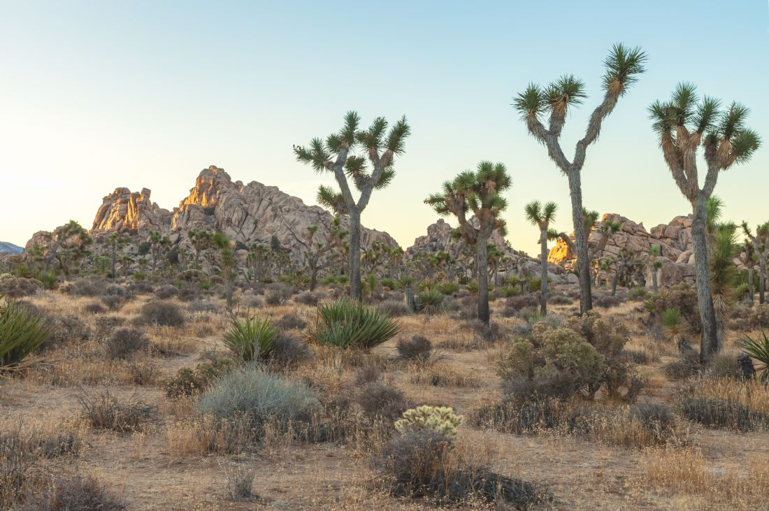 jonathan nguyen | joshua tree morning