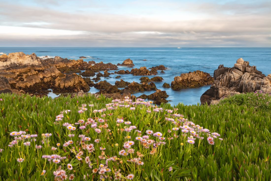 jonathan nguyen | daisies at coastal
