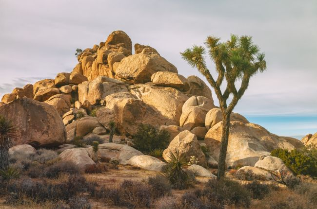 jonathan nguyen | joshua tree and rocks