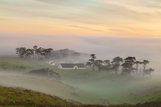 jonathan nguyen | fog over Pierce ranch