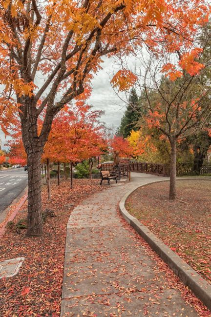 jonathan nguyen | yountville in autumn