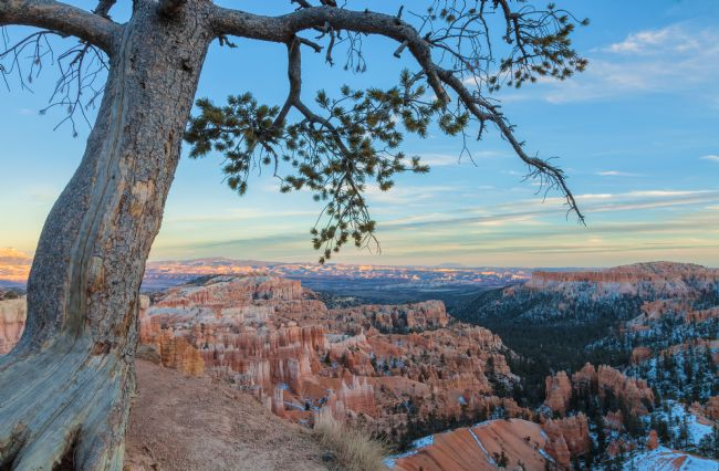 jonathan nguyen | bryce canyon and pine
