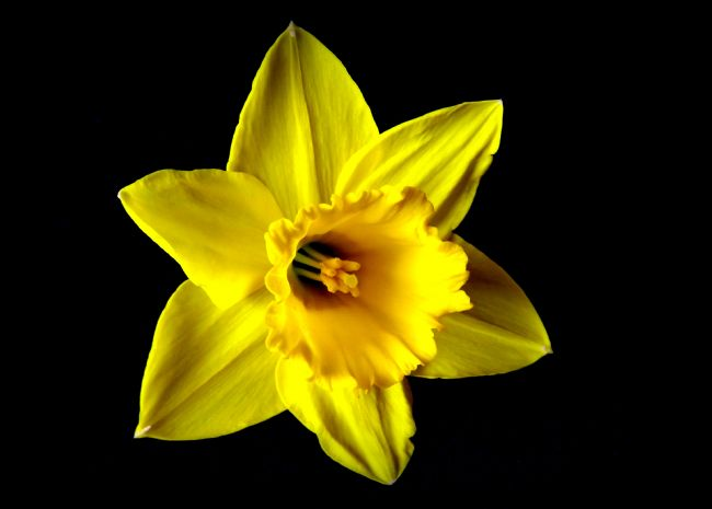 bill lighterness | Daff out of Black