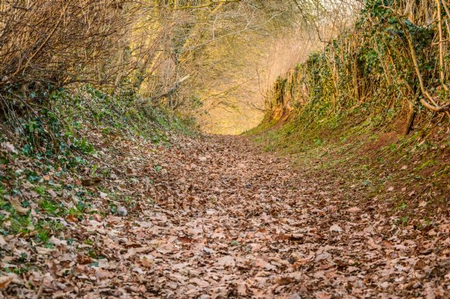 Matthew Boxley | Magical and Mysterious Woodland Path