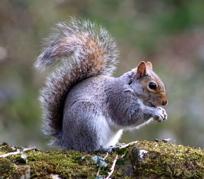tammy mellor | nutty squirrel