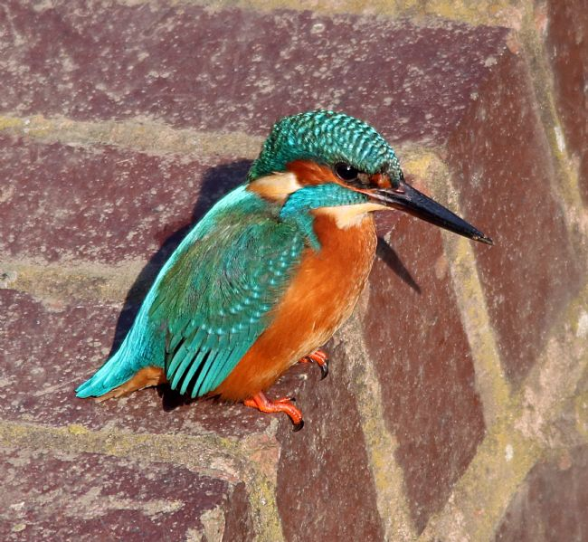tammy mellor | kingfisher