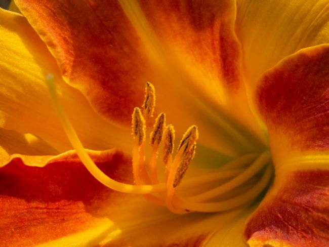 Jon Rendle | Orange Lily Flower