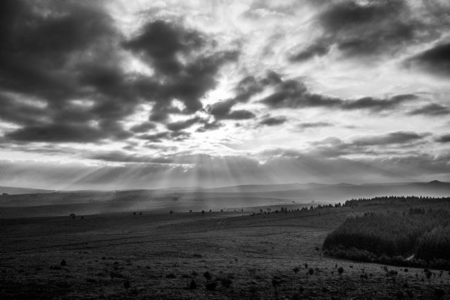 Jon Rendle | Rays and Trees in Mono