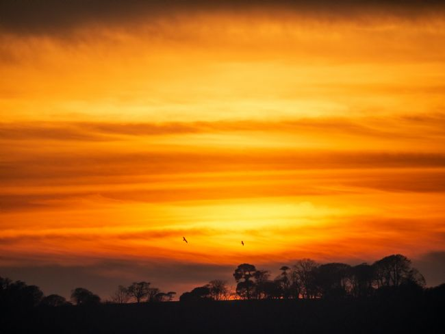 Jon Rendle | Sunset Behind The Trees