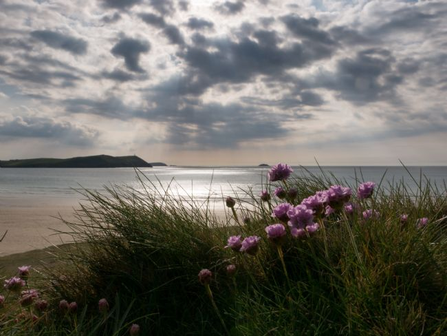 Jon Rendle | Cornish Sea Thrift