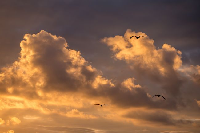 Jon Rendle | Three Gulls