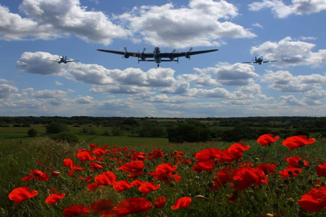 Ken Brannen |  Warbirds and poppy fields
