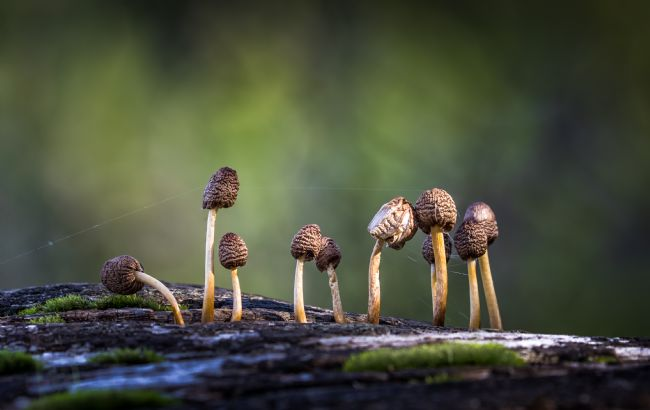 ANDY LOWE | Fated Fungi