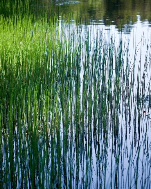 Liz Alderdice | Green Grow The Rushes-Oh