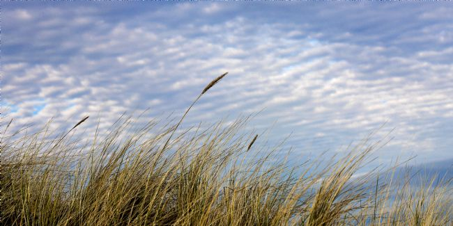 Liz Alderdice | Grasses Against The Sky