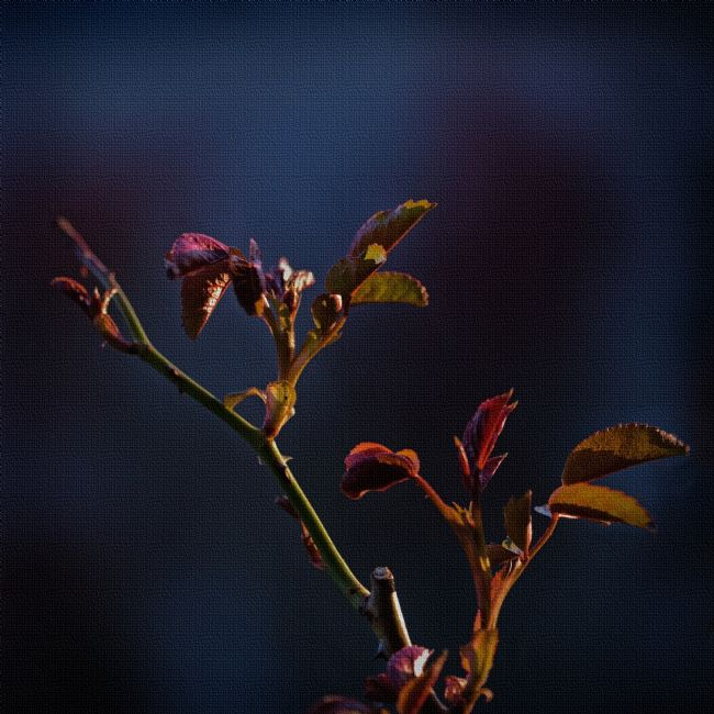 Liz Alderdice | Rose Leaves