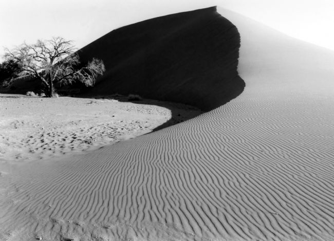 Serena Bowles | Dune 45 and a Lonesome Tree