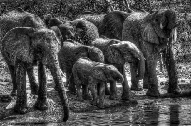 Perry Johnson | Elephants