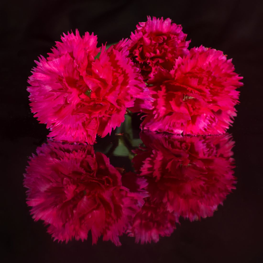 Peter Hemington | Three carnations