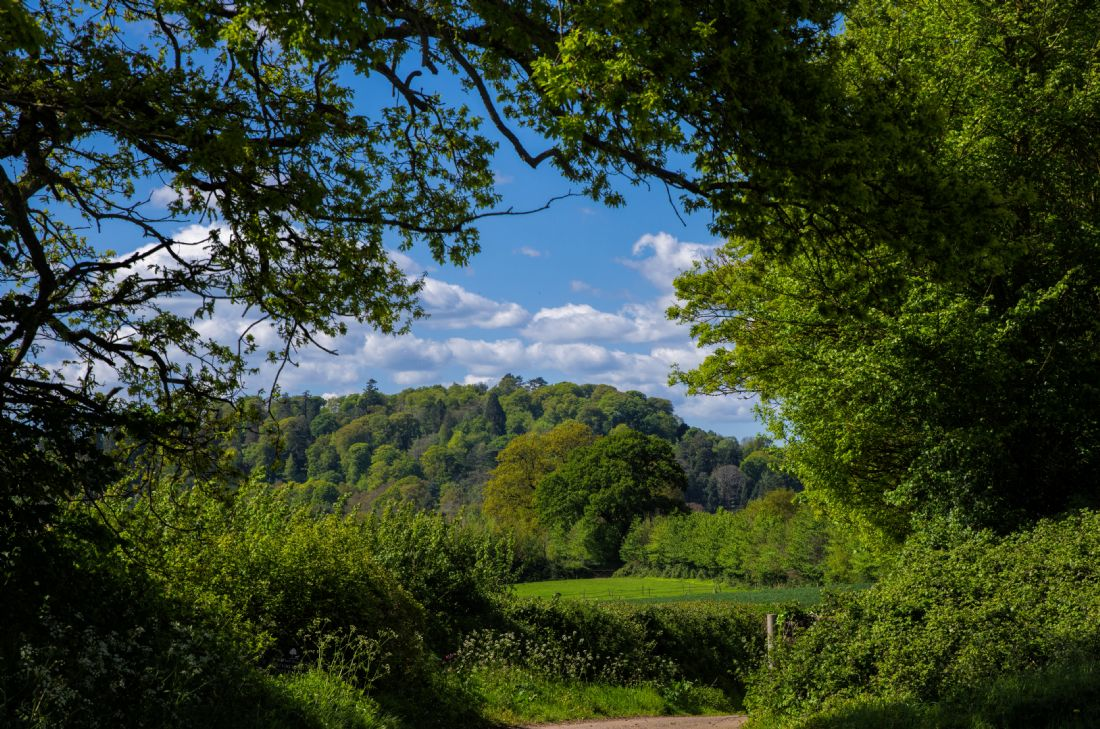 Peter Hemington | Killerton Clump