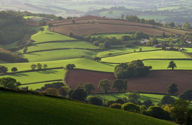 Pete Hemington | Mid Devon fields