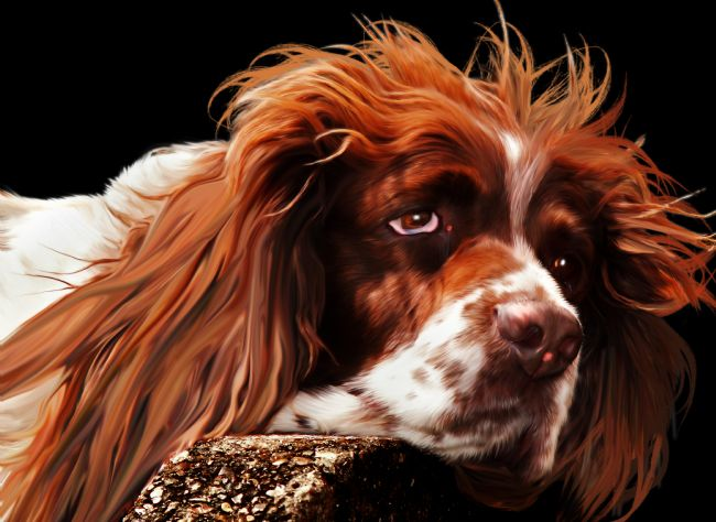 Peter Hemington | Springer spaniel
