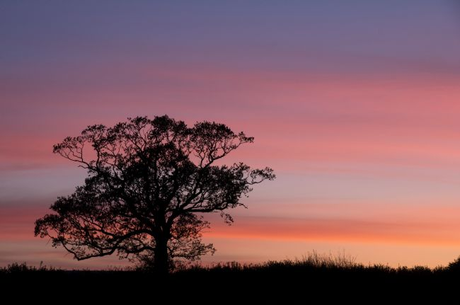 Peter Hemington | Sunset in Mid Devon