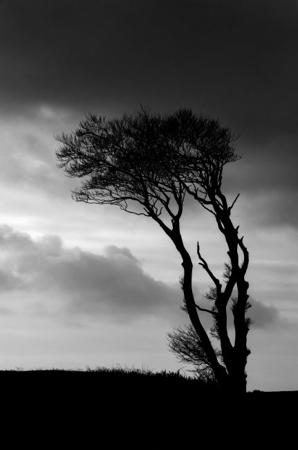 Peter Hemington | A lone tree at Horns Cross