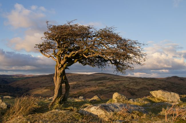 Pete Hemington | Lone tree on Dartmoor