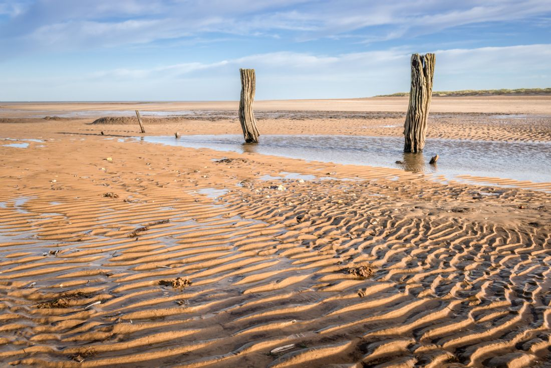 Stephen Mole | Stumps on  Titchwell beach