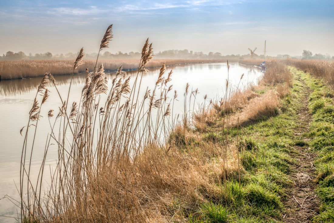 Stephen Mole | Riverbank to Thurne