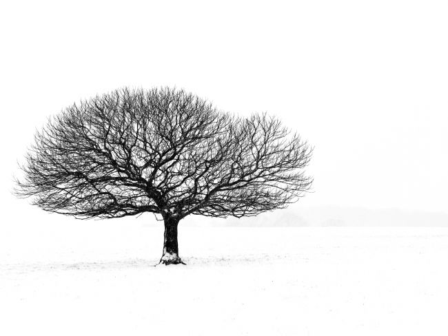 Stephen Mole | Black and white tree