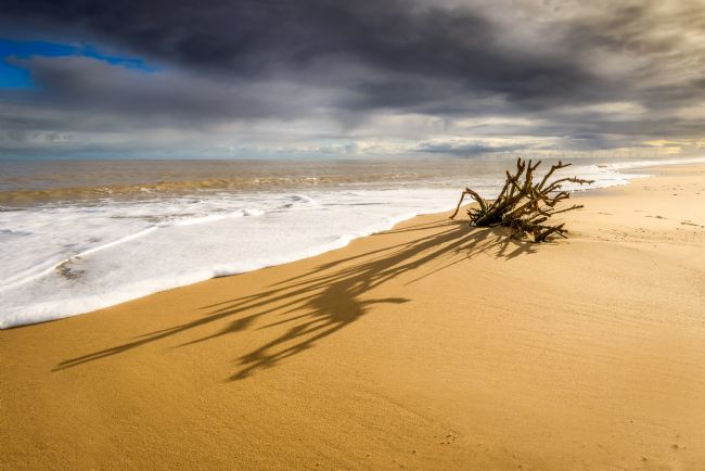 Stephen Mole | Root shadow on Hemsby Beach