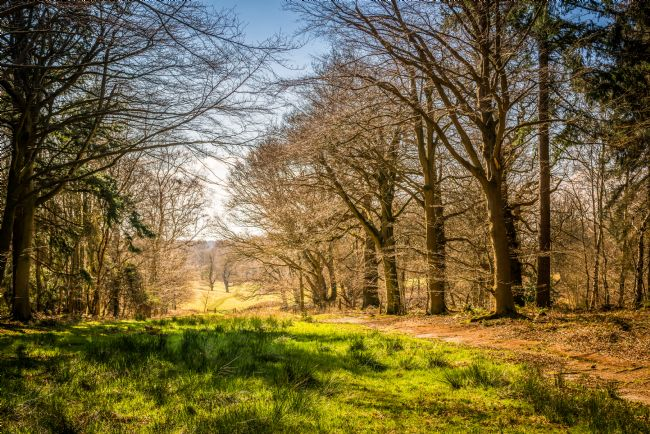 Stephen Mole | Walk way through Felbrigg woods