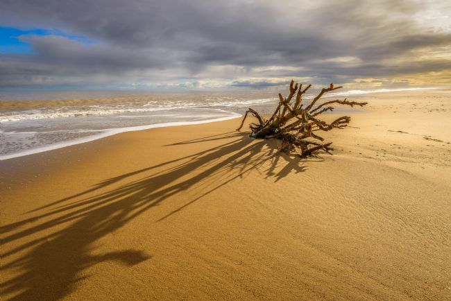 Stephen Mole | Tree roots on Hemsby Beach