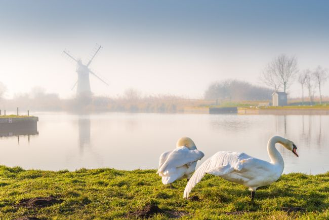 Stephen Mole | Two Swans at Thurne