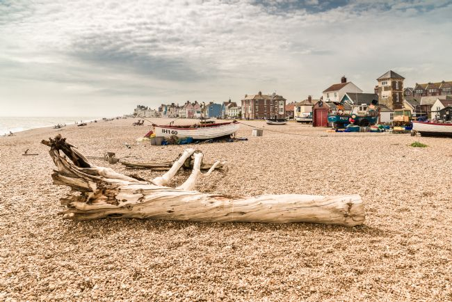 Stephen Mole | Tree Stump on Aldeburgh Beach