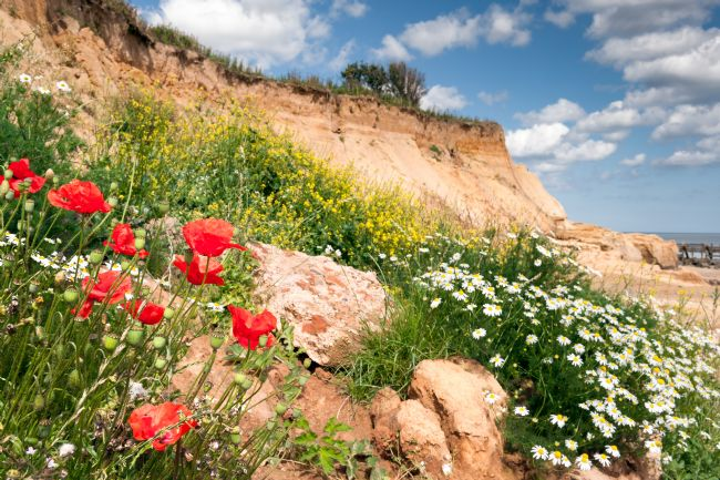 Stephen Mole | Poppies on Happisburgh Cliffs
