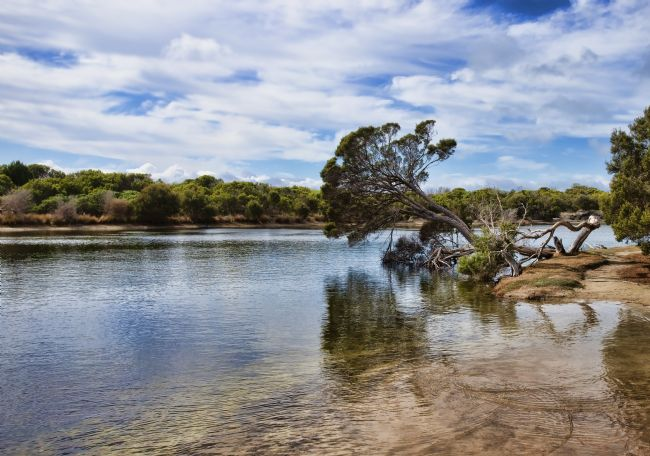 Anne Christie | Chapman River