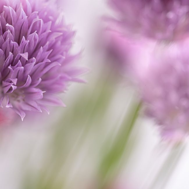 Richard Burdon | Chives