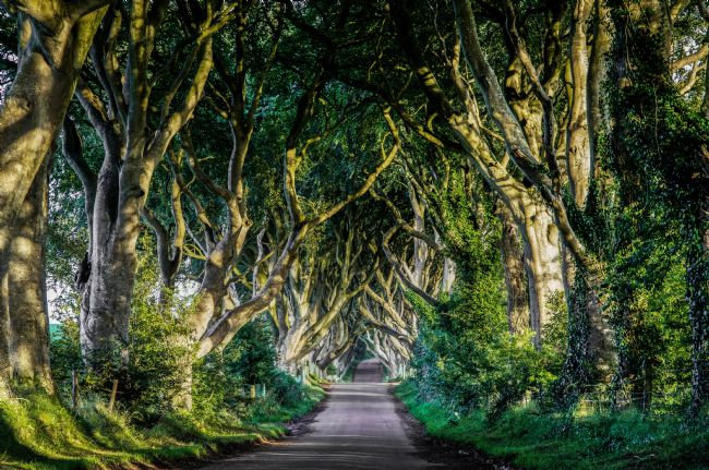 Colin Majury | The Dark Hedges