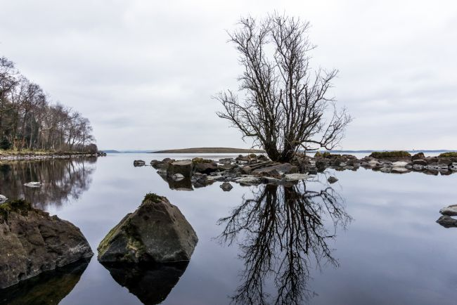 Colin Majury | A trees reflection