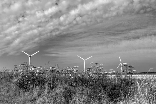 Susan Snow | Wind Turbines behind hogweed in Black and White