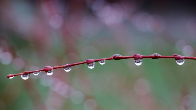 Susan Snow | Rain drops on a Branch