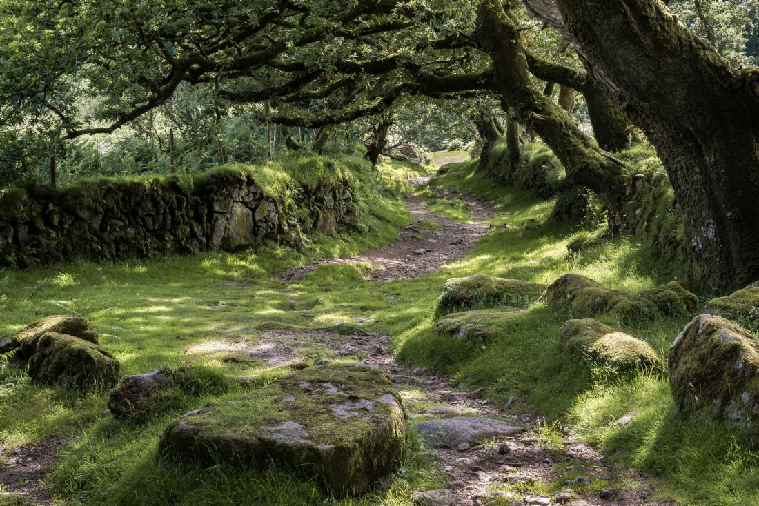 Jean Fry | Track to Joey's Lane - Dartmoor