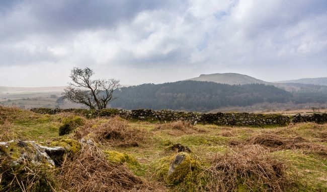 Jean Fry | Dartmoor near Down Tor