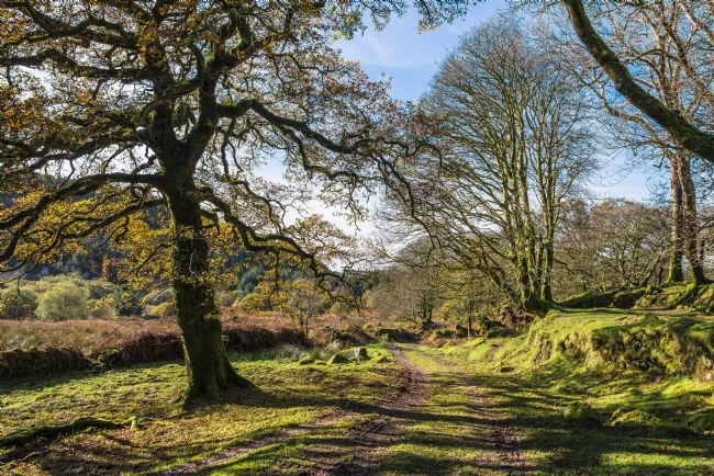 Jean Fry | A Dartmoor Track in October