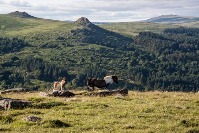 Jean Fry | Pony and Foal on Sheeps Tor