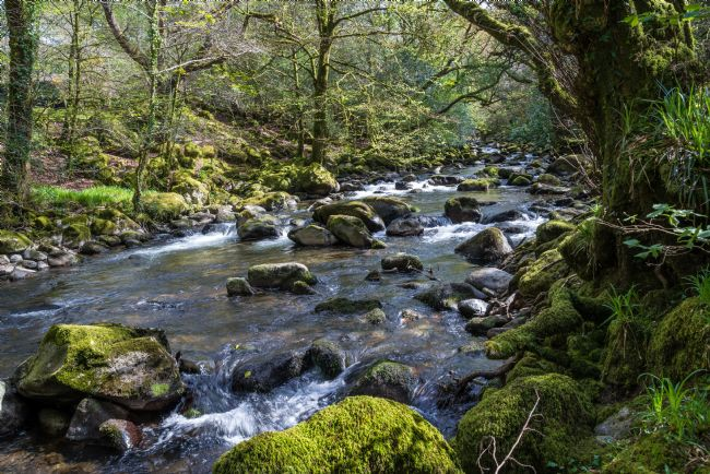 Jean Fry | River Plym in April